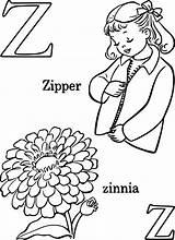 Zinnia Kwiaty Cynni Preschool Getdrawings sketch template