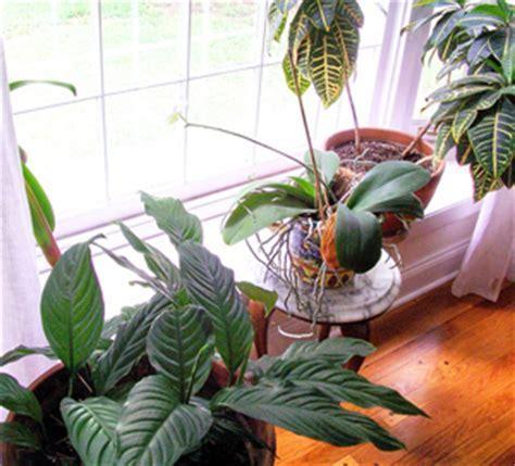 CultivatorsCorner.com » Blog Archive » Gnats on Houseplants