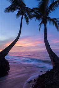 Palm Tree Sunset Beach Jamaica