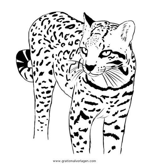 ozelot gratis malvorlage  tiere tiger ausmalen