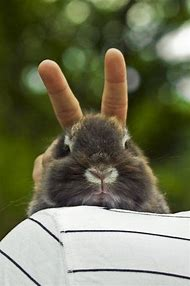 Best Funny Bunny Ideas And Images On Bing Find What Youll Love