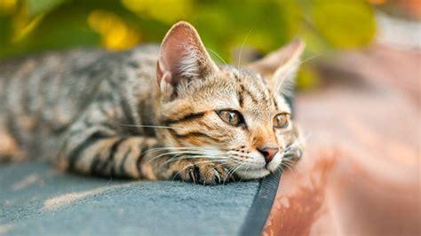durchfall bei katzen ursachen und massnahmen