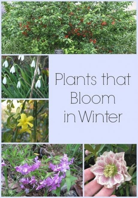 Do You Winter Gardening Blues by 25 Photo Of Outdoor Plants For Winter