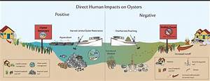 Shellfish Restoration And Related Topics  U00ab Oyster