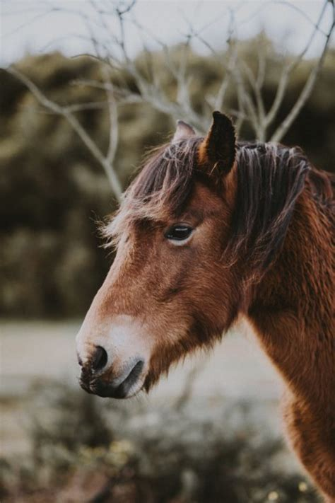 service mini horses ada facto animals really too plus cute they creativity challenges inspiration going looking iii title learn