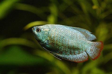 aquarium thermometers   reviews fish tank