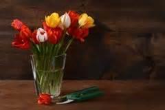 Rosen Im Topf überwintern : tulpen im topf so f hlen sie sich rundum wohl ~ Orissabook.com Haus und Dekorationen