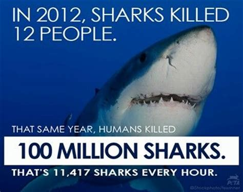 12 Million Are About To 100 Million Sharks Killed Each Year Why Why Kill