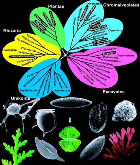 Klasifikacija eukariota — Bionet Škola