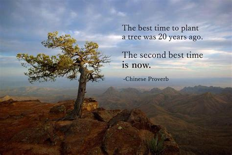 The Best Time To Plant A Tree Was Yea-chinese