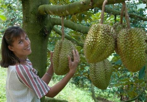 Durian Fruit Tree For Sale