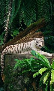 Cool 25 Best White Tiger Photographic https://meowlogy.com ...