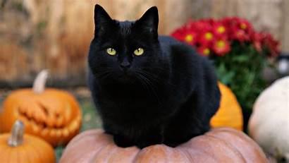 Halloween Cat Cats Psa Mrs Kind Mr