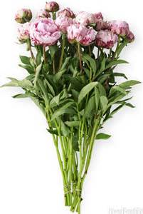 organizing ideas for bathrooms peony flower care peony season