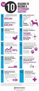 What Do You Do As A Medical Assistant 10 Reasons To Become A Veterinary Assistant Infographic