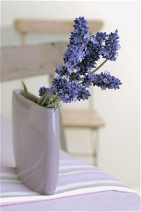fresh lavender flower buy fresh lavender flowers
