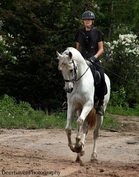 stallion horses horse breeder