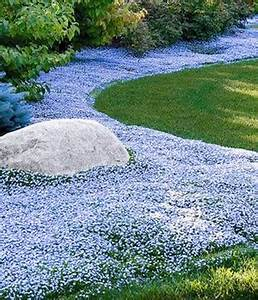 Hang Bepflanzen Bodendecker : bodendecker stauden online kaufen bestellen bei baldur ~ Lizthompson.info Haus und Dekorationen