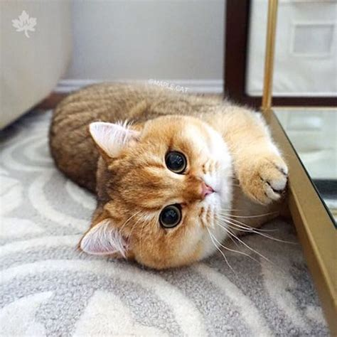 Cat Behaviors And Common Problems Explained Care Your