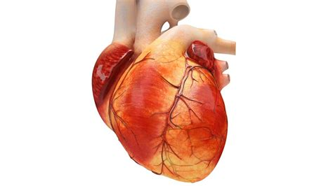 Lab Grows Heart Tissue That Can Beat By Itself