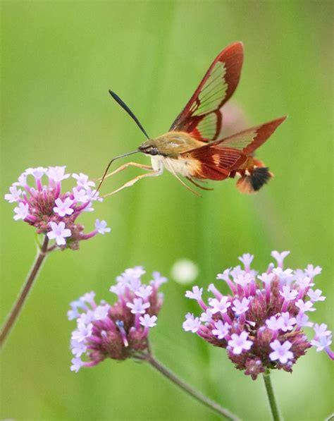 Invertebrata | Bichos