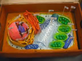 7th Grade Plant Cell Model Project