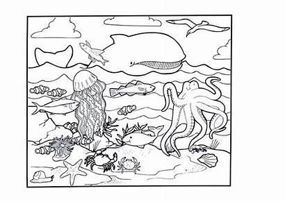 Coloring Ocean Pages Printable Animals Animal Preschool