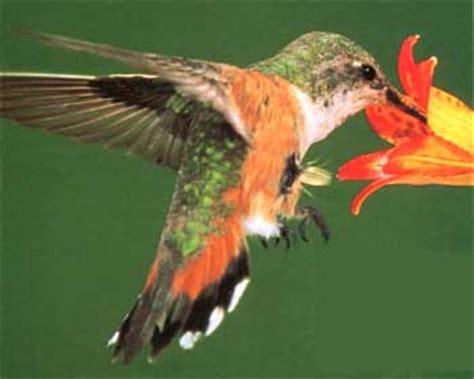 colibris et colibri zen educadurable