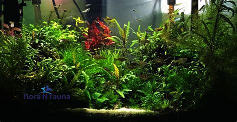 Fauna Aquascape by Aquascaping 5 Flora N Fauna