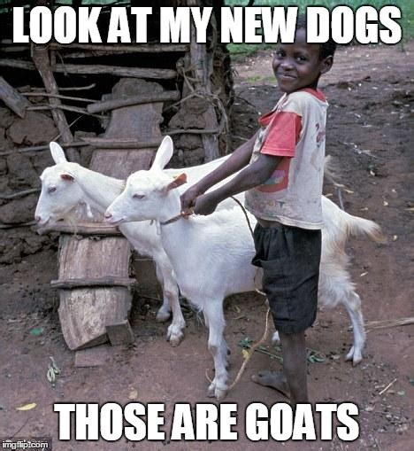 Isis Goat Memes - isis goat meme pictures to pin on pinterest pinsdaddy