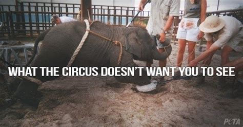 petition ban circuses  traveling acts  animals