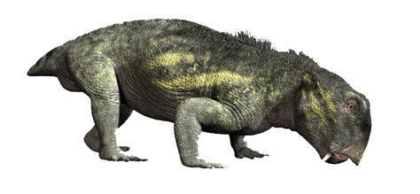 Ancient Mammal Reptiles
