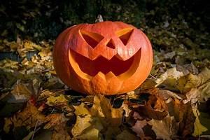 Free, Images, Leaf, Fall, Flower, Spooky, Orange, Autumn, Pumpkin, Halloween, Season, Jack, O