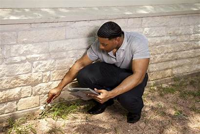 Foundation Wall Pest Inspector Control Outdoor Healthy
