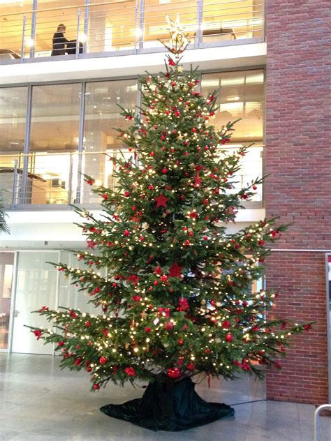 best 28 weihnachtsbaum wasser geben weihnachtsbaum im