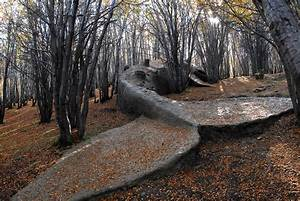 A beached whale in the forests of argentina colossal for A beached whale in the forests of argentina