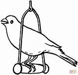 Canary Coloring Pages Bird Printable Template Birds Print Supercoloring Drawing Animal Sketch Popular sketch template
