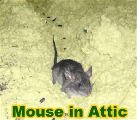 mouse   attic    rid  mice   attic