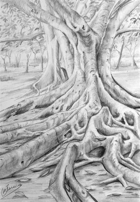 cuaderno de apuntes: Dibujo de Ficus a grafito, paso a paso