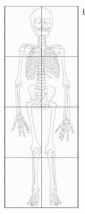 Life Size Bone Skeleton Print Out