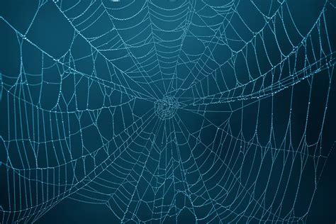 Web Wallpaper Anime - spider web photos weneedfun