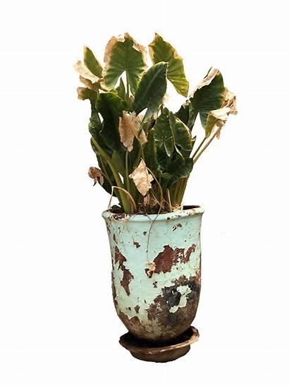 Plant Pot Decorative Pots Exterior Trees Plants