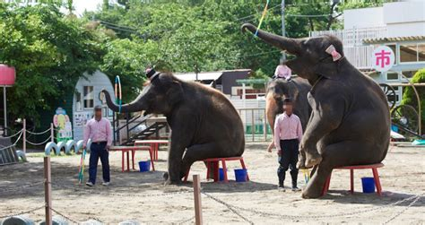 animal zoos protection aquariums elephant performance abuse hundreds mistreatment shocking uncovers horrible