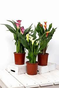 Trockene Luft Im Schlafzimmer : emejing pflanzen gegen trockene raumluft images ~ Lizthompson.info Haus und Dekorationen