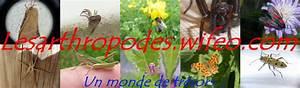 Faire Fuir Les Araignées : morphologie de l 39 araign e ~ Melissatoandfro.com Idées de Décoration