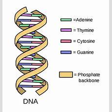 Structure Wikipedia