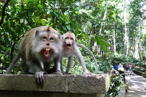 ubuds monkey forest jeffrey donenfeld