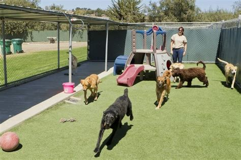 dog kennel covers   pet life today