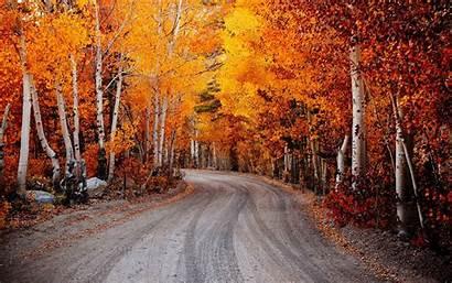 Autumn Leaves Road Nature Landscape Birch