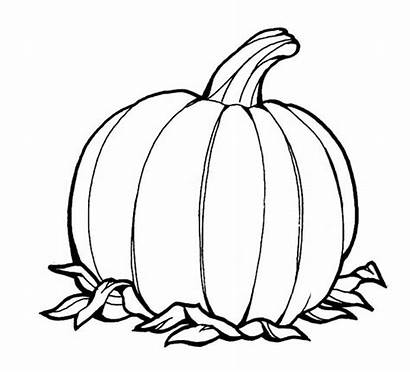 Coloring Pumpkins Fruit Pumpkin Pages Printable Awesome